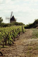 A Red Burgundy Tasting, Friday 27th October 2017