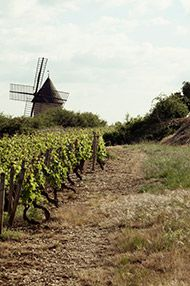 White Burgundy Tasting, Thursday 1st February 2018